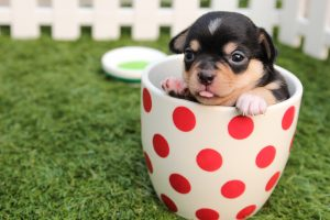puppy-in-a-cup