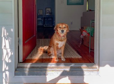 brown-short-coated-dog-sitting-on-brown-wooden-floor-3987557-scaled-1.jpg