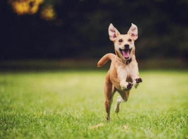 happy-puppy-training-perfect-pup